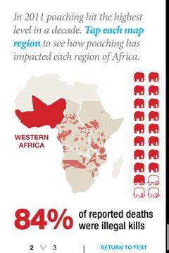 Ivory Africa 1
