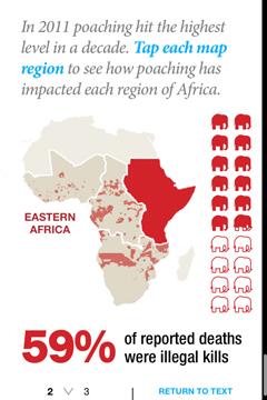 Ivory Africa 2