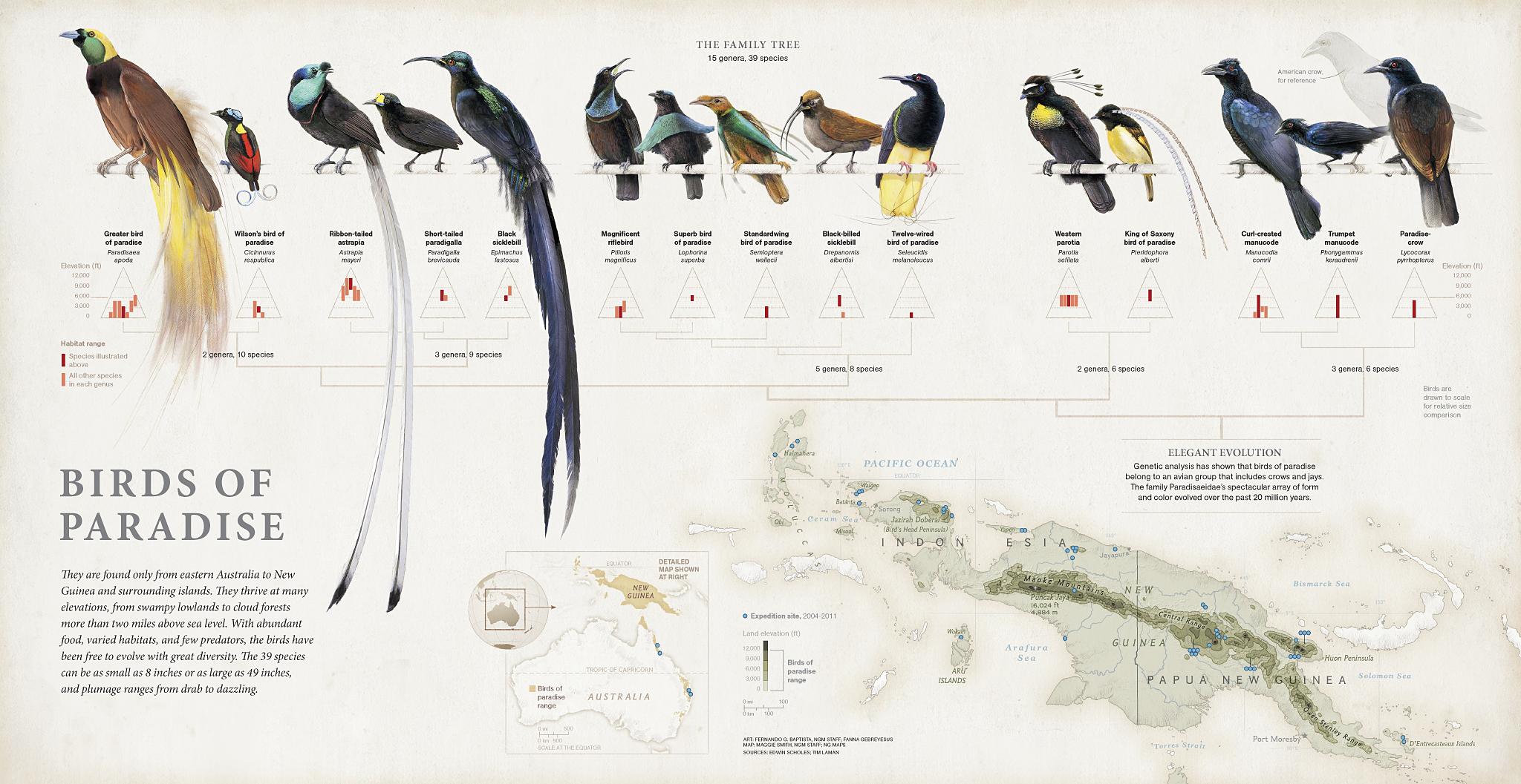 Hasil gambar untuk habitat red bird of paradise