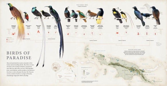 Birds of Paradise_Final